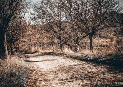 Camino de la vía